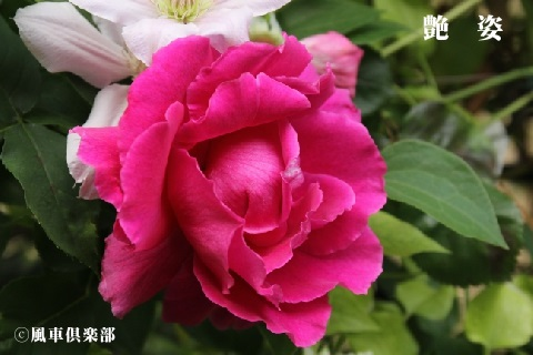 gardening_3632.jpg