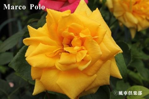 gardening_3659.JPG
