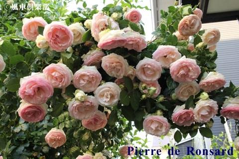 gardening_3661.JPG
