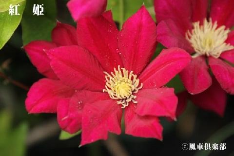 gardening_3676.jpg