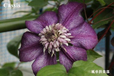 gardening_3677.jpg