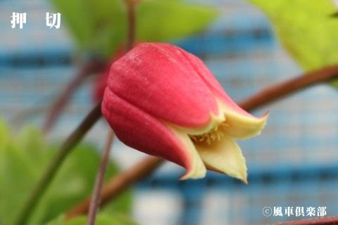 gardening_3681.jpg