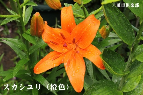 gardening_3683.JPG