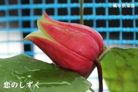 gardening_3684.JPG