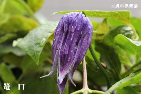 gardening_3686.JPG