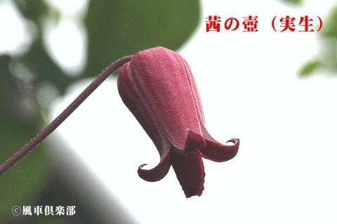 gardening_3691.jpg