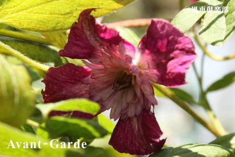 gardening_3695.jpg