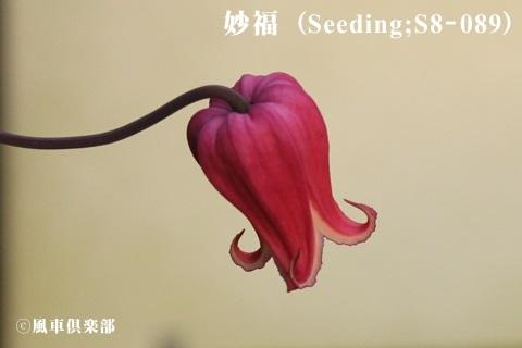gardening_3707.jpg
