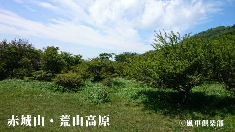 gardening_3713.jpg