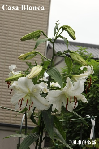 gardening_3716.jpg