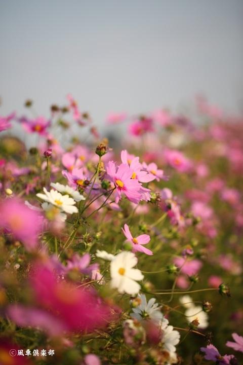 gardening_3743.jpg
