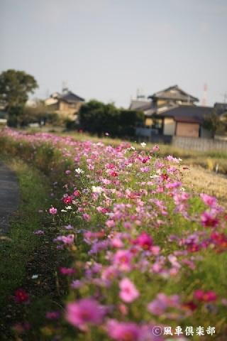 gardening_3744.jpg