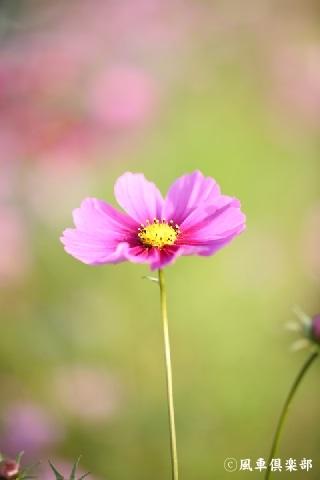 gardening_3745.jpg
