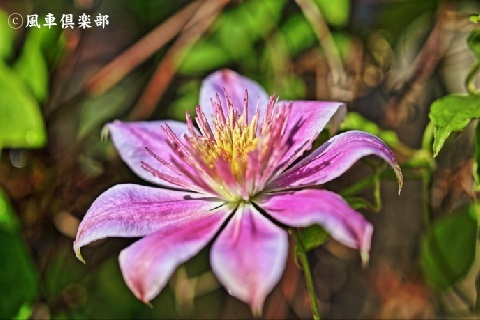 gardening_3761.JPG