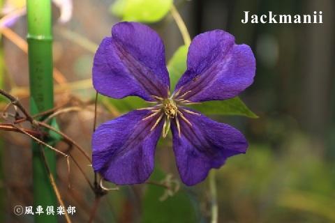 gardening_3768.jpg