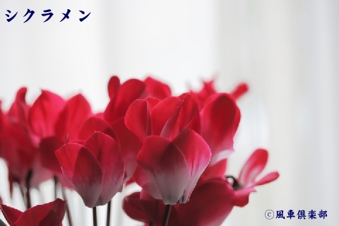 gardening_3770.jpg