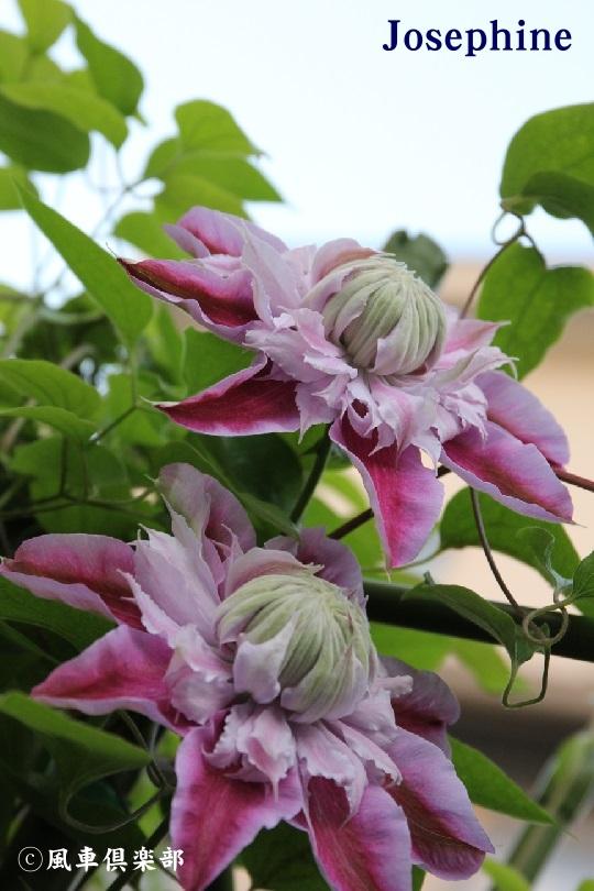 gardening_3808.jpg