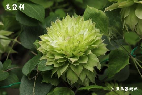 gardening_3813.jpg