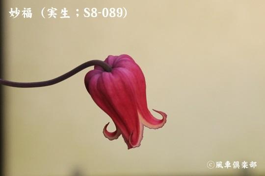 gardening_3818.jpg