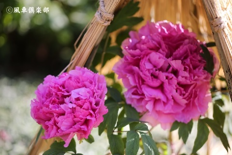 gardening_3829.JPG