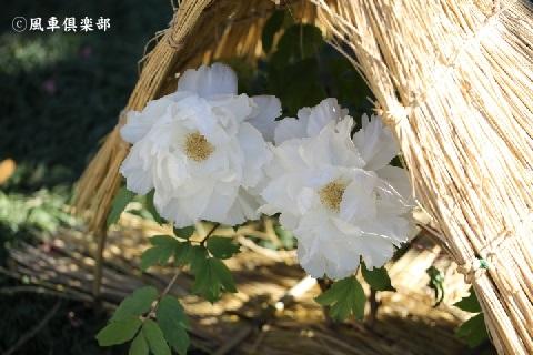 gardening_3830.JPG