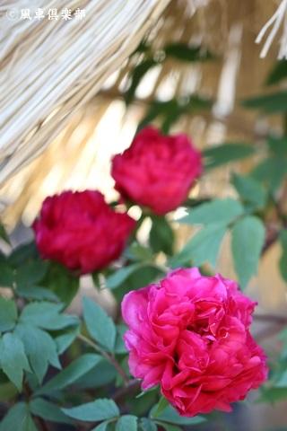 gardening_3831.JPG