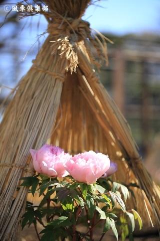 gardening_3833.JPG