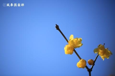 gardening_3834.JPG
