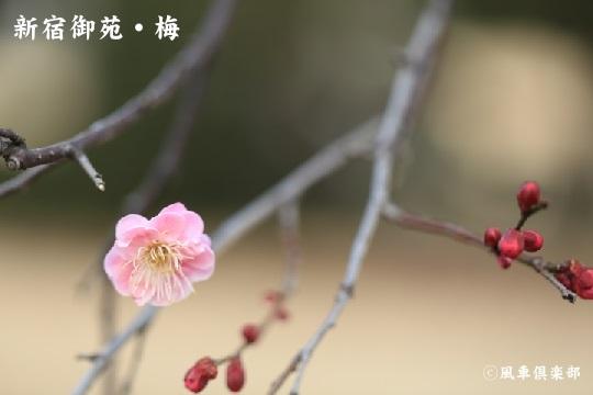 gardening_3854.JPG