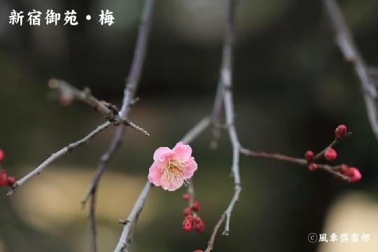 gardening_3855.JPG