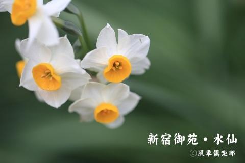 gardening_3857.JPG
