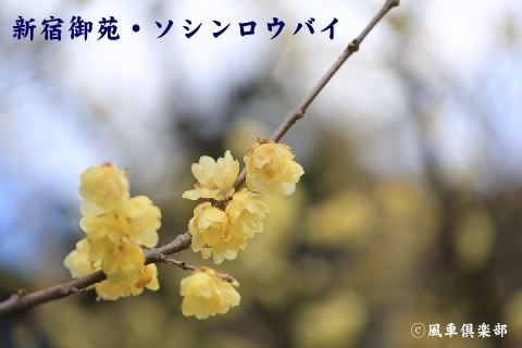 gardening_3858.JPG