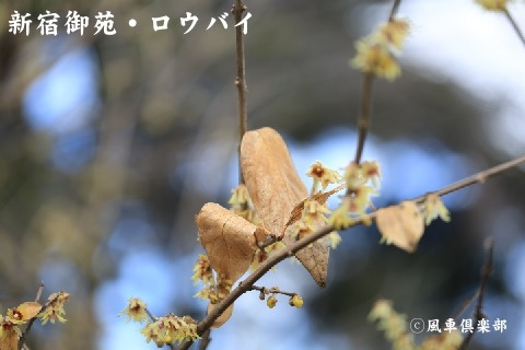 gardening_3859.JPG