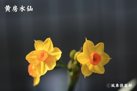 gardening_3872.jpg
