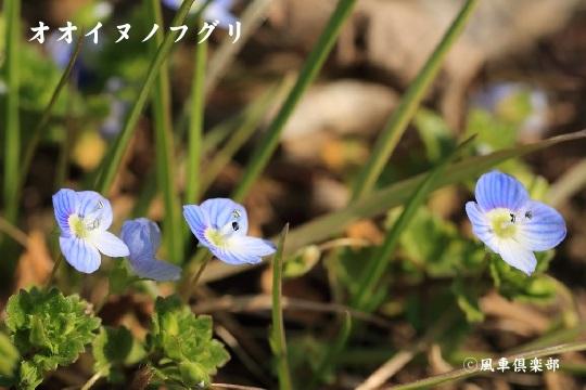 gardening_3873.jpg