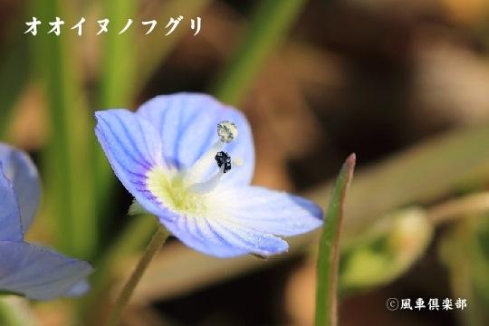 gardening_3874.jpg