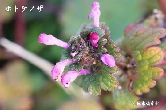 gardening_3875.jpg