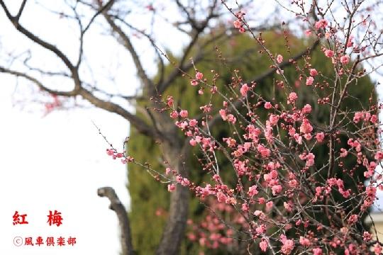 gardening_3876.jpg