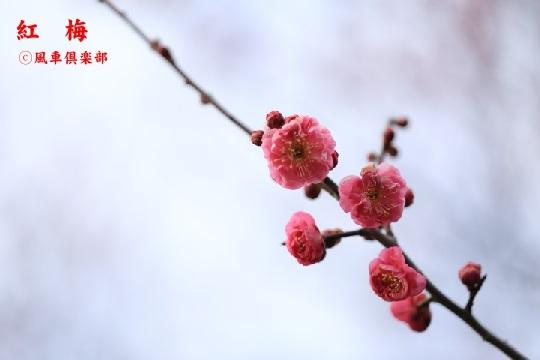 gardening_3877.jpg