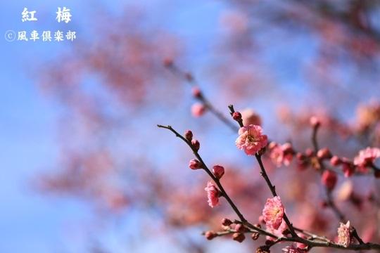 gardening_3883.jpg