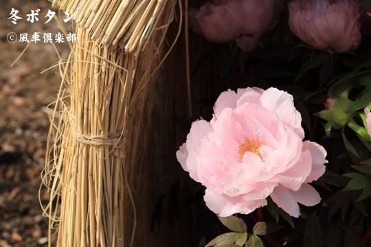 gardening_3884.jpg