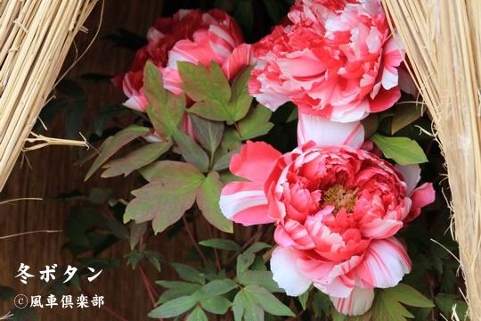 gardening_3885.jpg