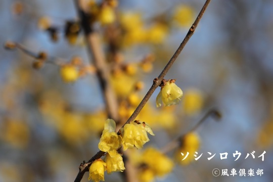 gardening_3887.jpg