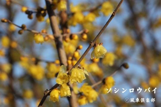 gardening_3888.jpg