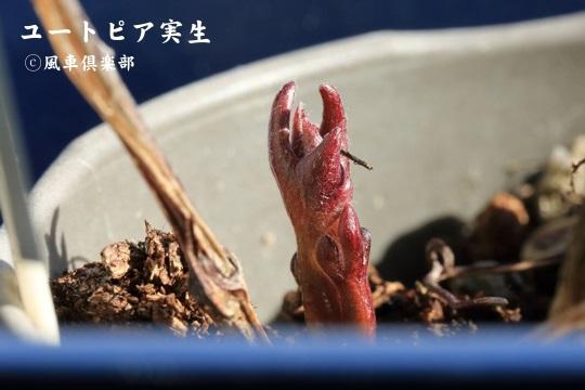 gardening_3900.jpg