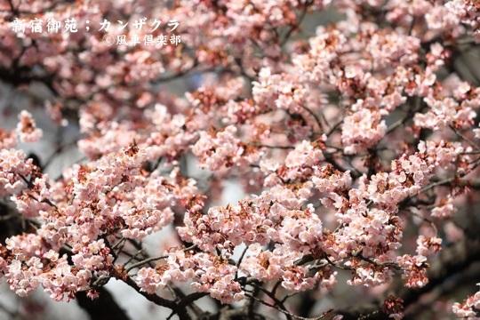 gardening_3902.JPG