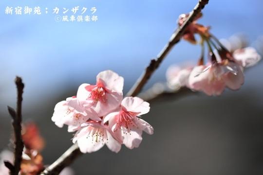 gardening_3903.JPG
