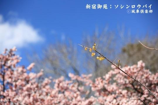 gardening_3904.JPG