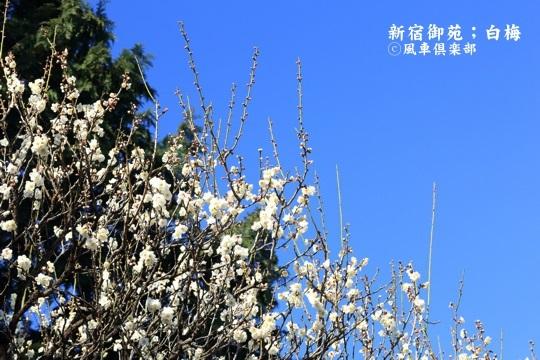 gardening_3905.JPG