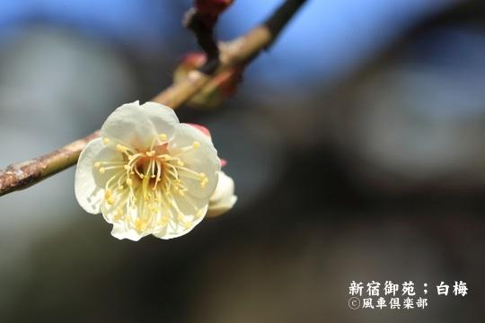gardening_3906.JPG